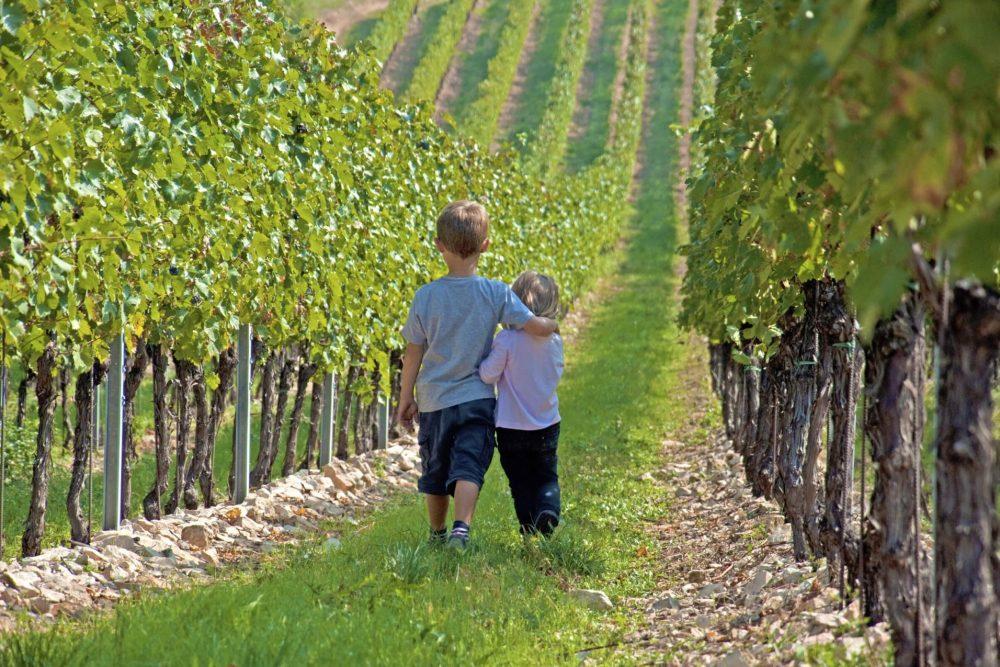 Karlbacher Domizil Großkarlbach Umgebung Weinwanderwege